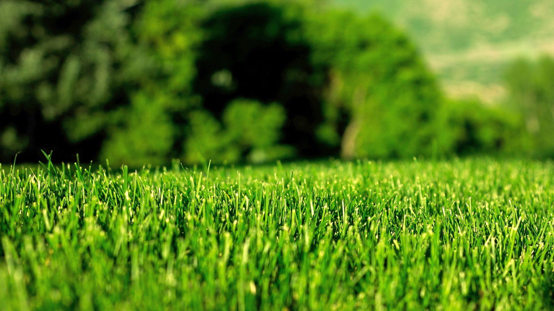 Aiman Lawn Care